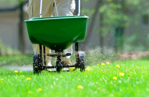 fertilize-weed-control